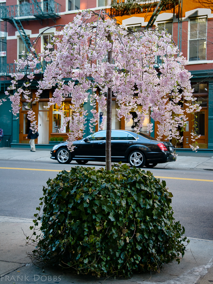 Spring street bouquet041701