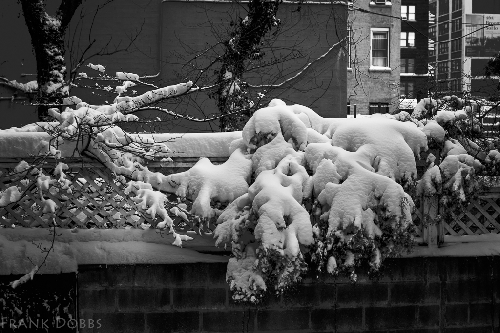 Snow on Robert's Fence - tone curve-2